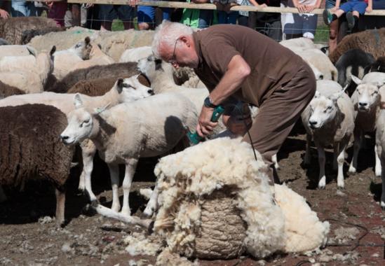 Schapenboerderij texel welkomstkorting 10 for Schapenboerderij te koop